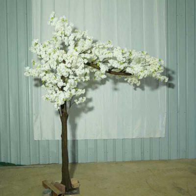 sakura canopy tree