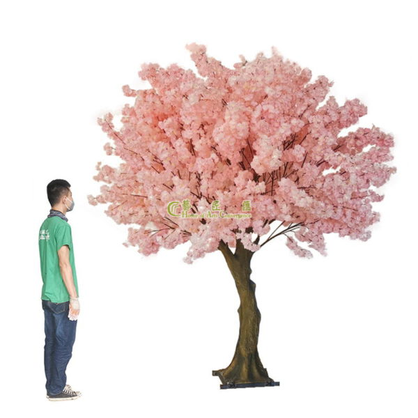 250cm high indoor cherry trees